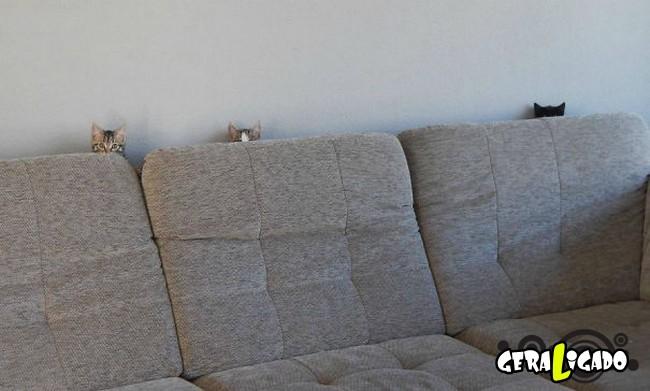 Os Gatos mais ninjas1