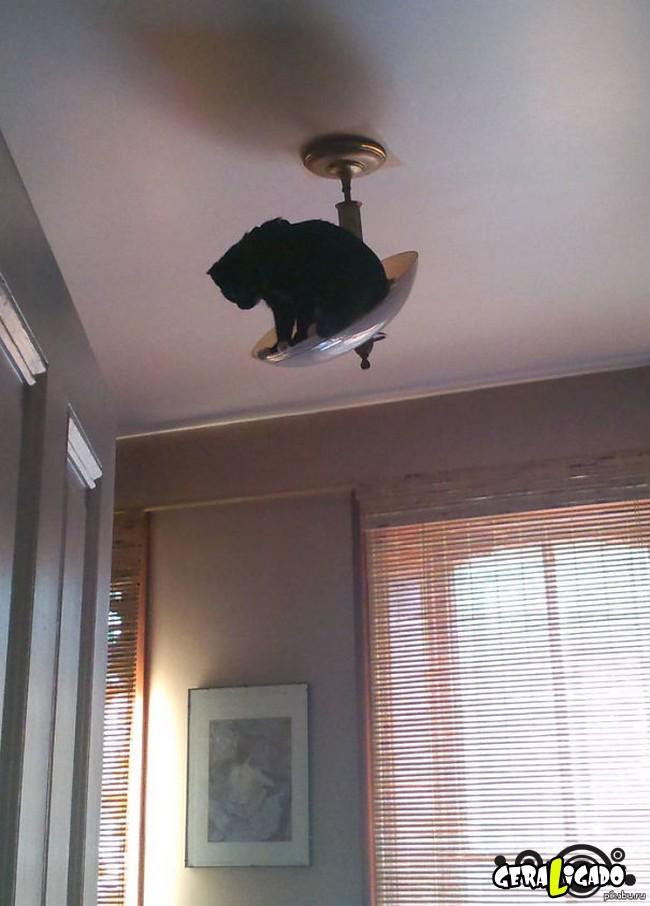 Os Gatos mais ninjas18