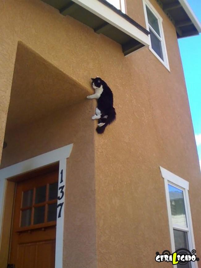 Os Gatos mais ninjas19