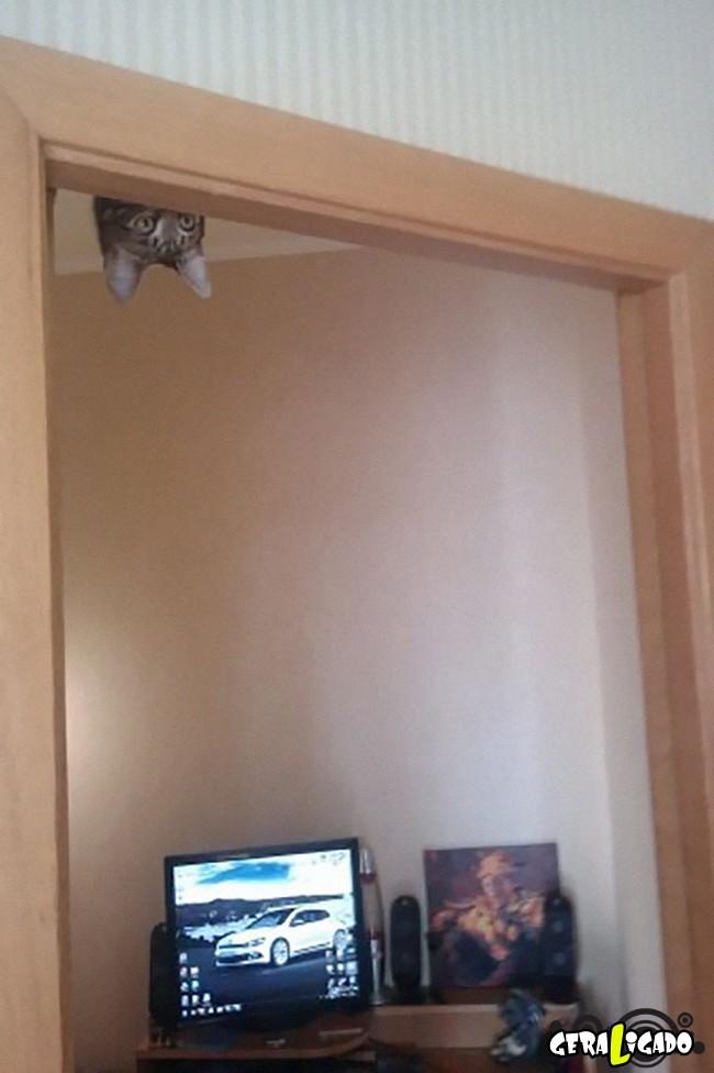 Os Gatos mais ninjas4