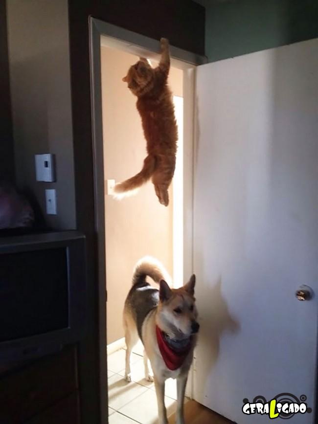 Os Gatos mais ninjas5