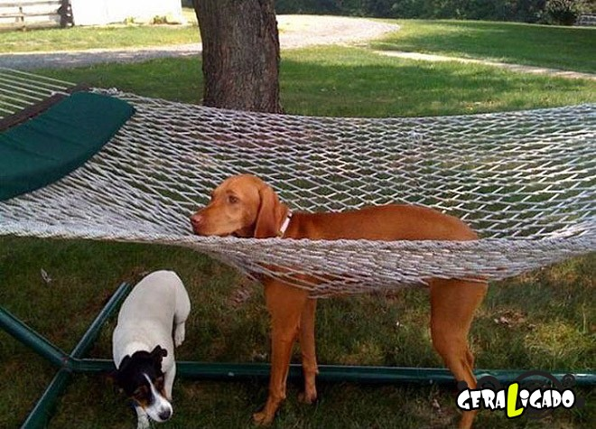Cães e suas ideias não muito inteligentes