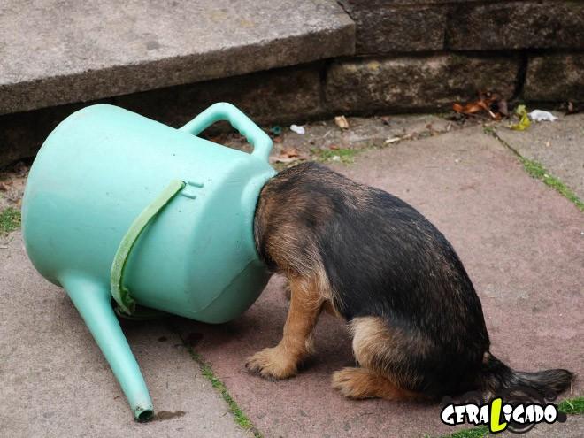 Cães e suas ideias não muito inteligentes10
