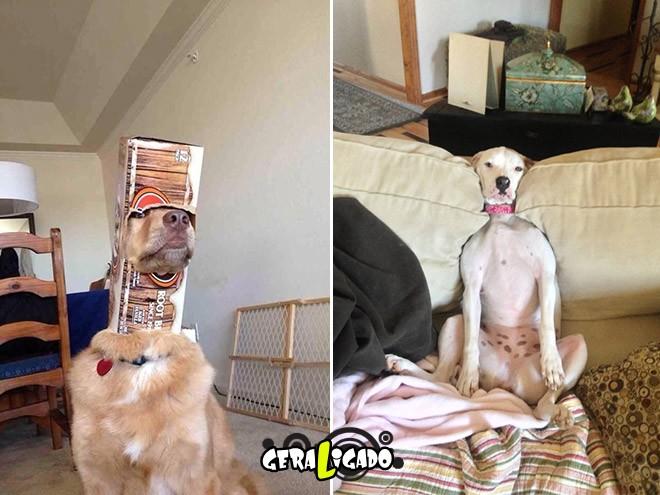Cães e suas ideias não muito inteligentes11