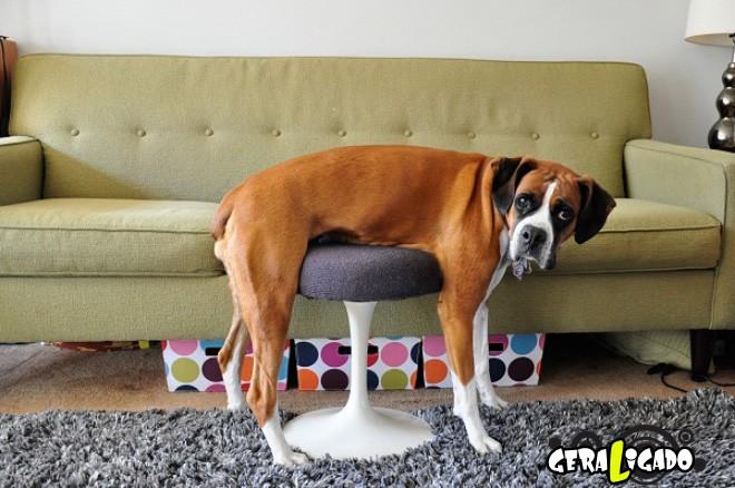 Cães e suas ideias não muito inteligentes12