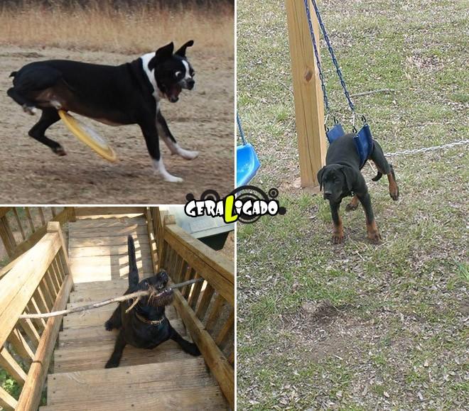 Cães e suas ideias não muito inteligentes13