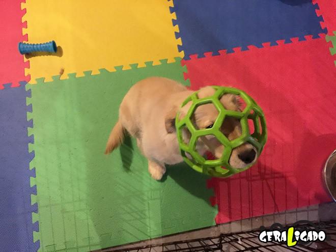Cães e suas ideias não muito inteligentes14