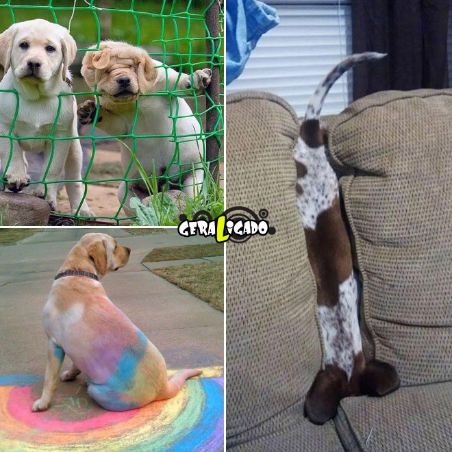 Cães e suas ideias não muito inteligentes2