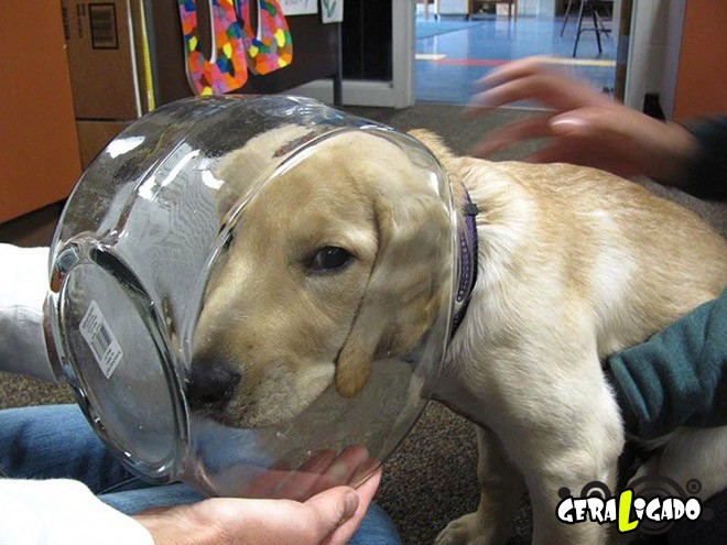 Cães e suas ideias não muito inteligentes3