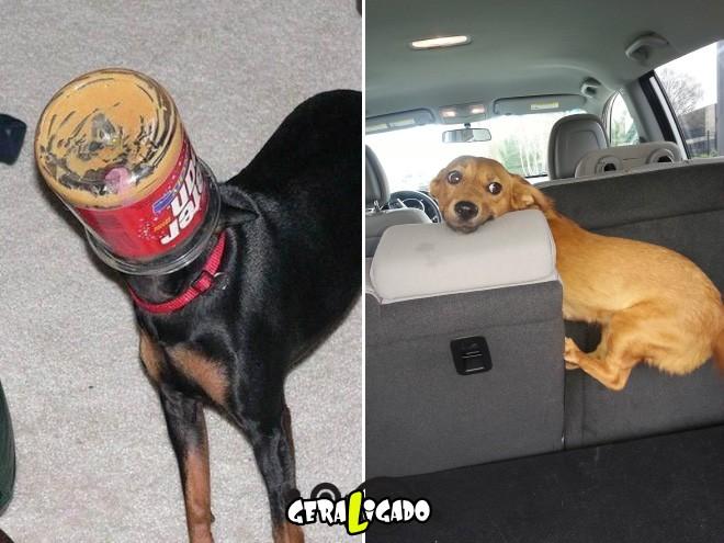 Cães e suas ideias não muito inteligentes6