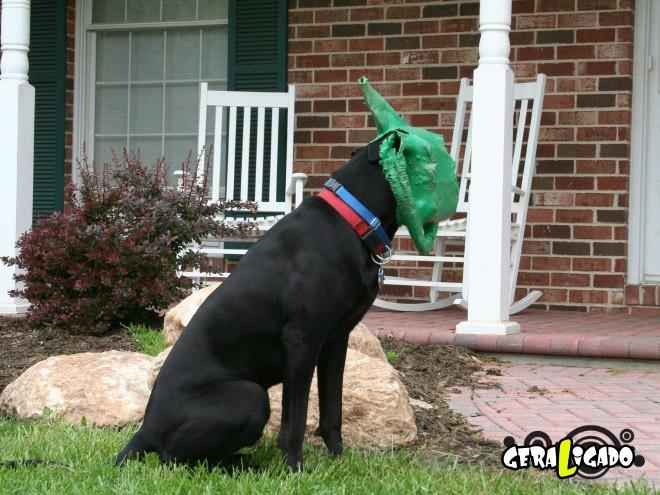Cães e suas ideias não muito inteligentes7