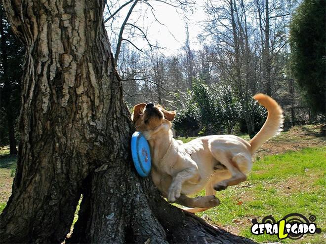 Cães e suas ideias não muito inteligentes8