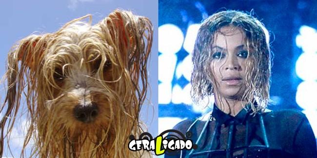 Cachorros molhados que se parecem com celebridades