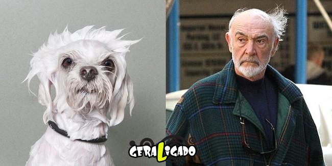 Cachorros molhados que se parecem com celebridades10