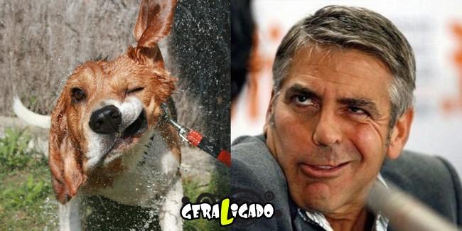 Cachorros molhados que se parecem com celebridades11