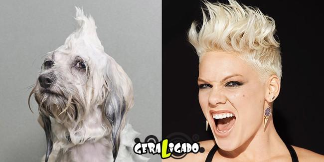 Cachorros molhados que se parecem com celebridades12