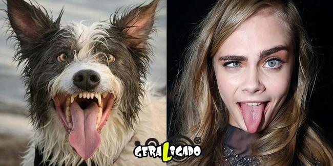 Cachorros molhados que se parecem com celebridades2
