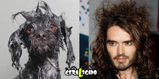 Cachorros molhados que se parecem com celebridades3