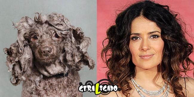 Cachorros molhados que se parecem com celebridades4