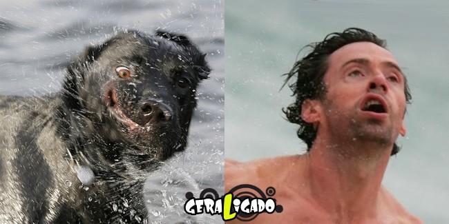 Cachorros molhados que se parecem com celebridades6
