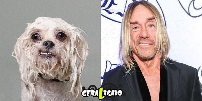 Cachorros molhados que se parecem com celebridades7
