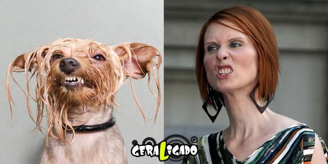 Cachorros molhados que se parecem com celebridades8