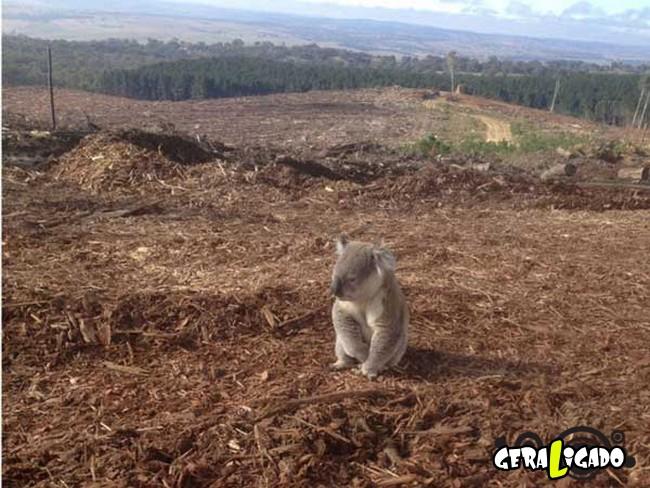 Imagens de cortar o coração mostram a devastação humana ao meio ambiente1