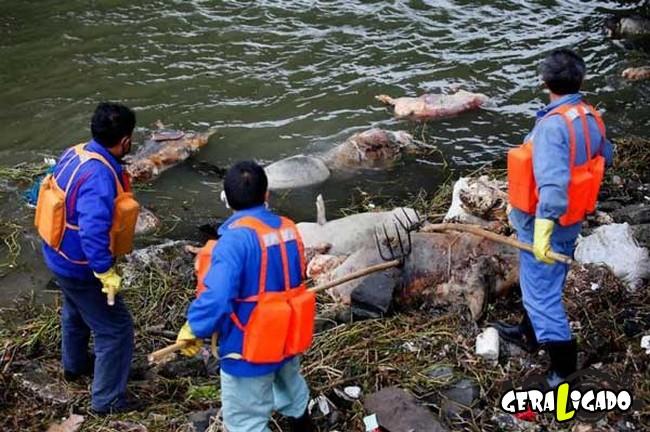Imagens de cortar o coração mostram a devastação humana ao meio ambiente22