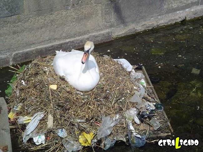 Imagens de cortar o coração mostram a devastação humana ao meio ambiente24
