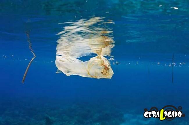 Imagens de cortar o coração mostram a devastação humana ao meio ambiente25