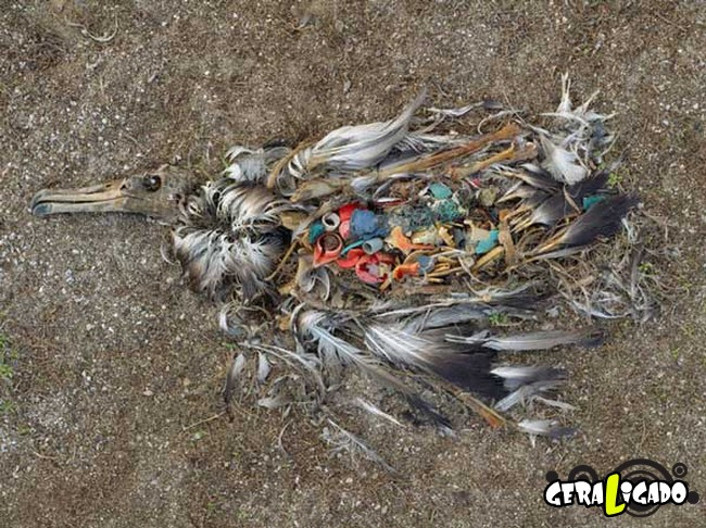 Imagens de cortar o coração mostram a devastação humana ao meio ambiente3