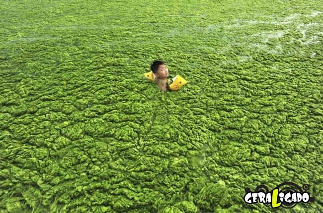 Imagens de cortar o coração mostram a devastação humana ao meio ambiente30
