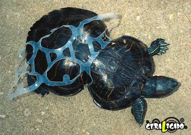 Imagens de cortar o coração mostram a devastação humana ao meio ambiente7