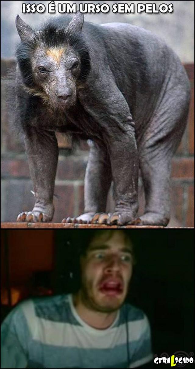 3 Curiosidade do dia - Urso sem pelos