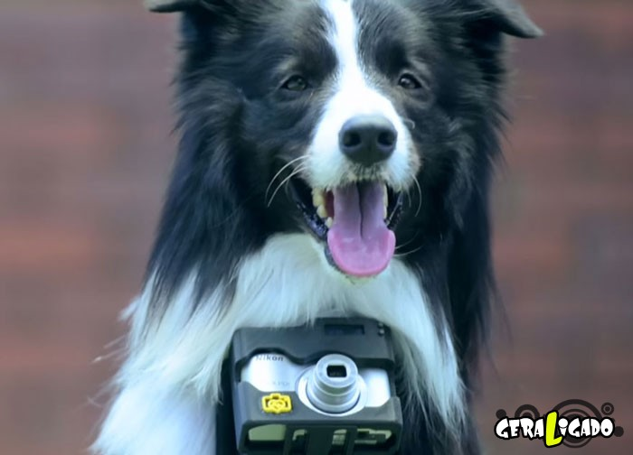 Cão fotógrafo registra imagens através dos seus batimentos cardíacos1