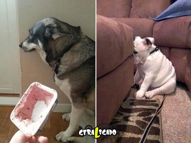 Cães e suas maneiras de pedir perdão pelo vacilo1