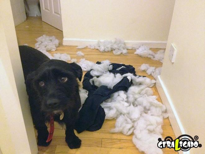 Cães e suas maneiras de pedir perdão pelo vacilo11