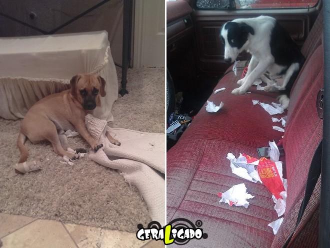 Cães e suas maneiras de pedir perdão pelo vacilo12