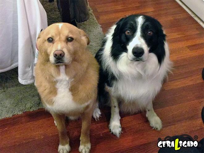 Cães e suas maneiras de pedir perdão pelo vacilo13