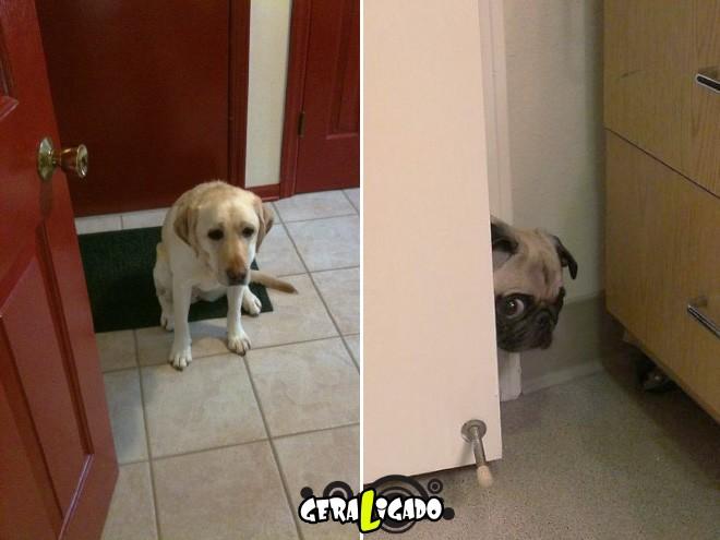 Cães e suas maneiras de pedir perdão pelo vacilo15
