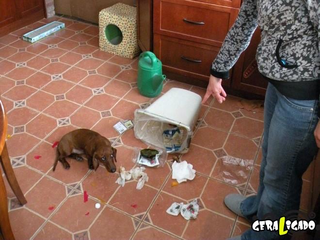 Cães e suas maneiras de pedir perdão pelo vacilo16