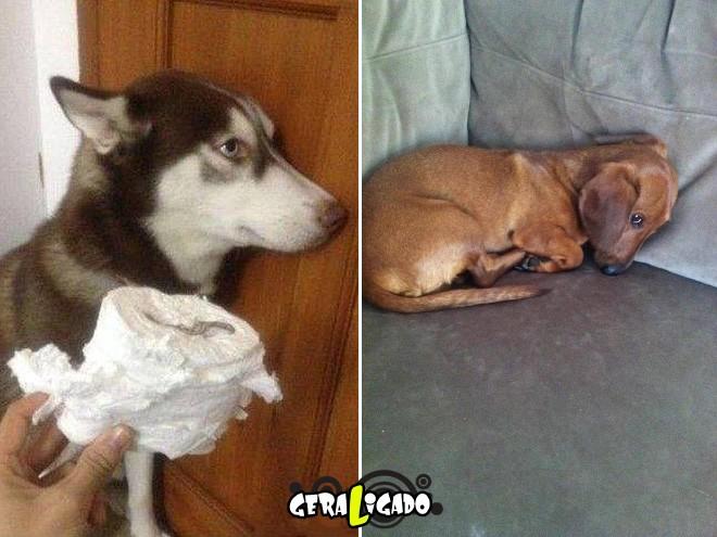 Cães e suas maneiras de pedir perdão pelo vacilo2
