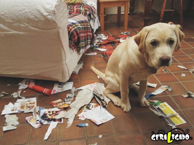 Cães e suas maneiras de pedir perdão pelo vacilo3
