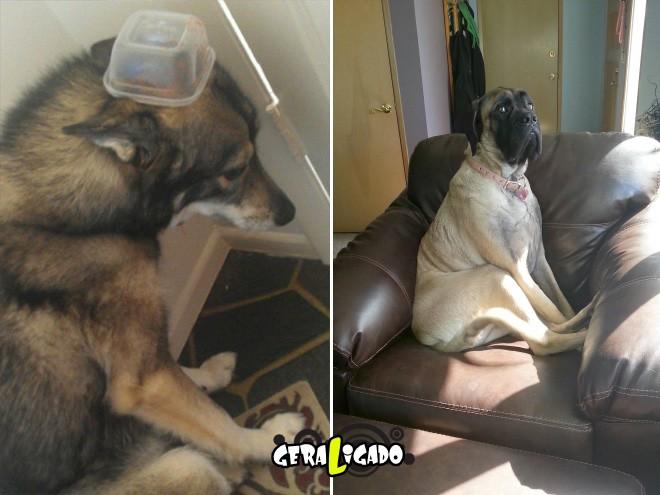 Cães e suas maneiras de pedir perdão pelo vacilo4