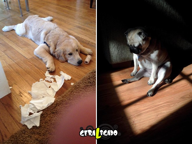 Cães e suas maneiras de pedir perdão pelo vacilo6