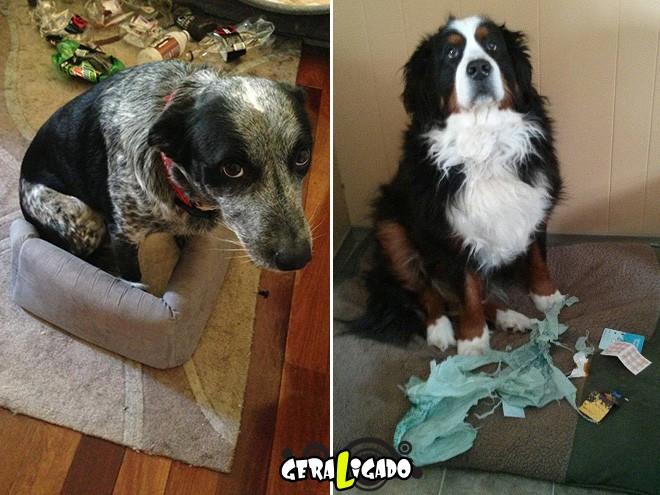 Cães e suas maneiras de pedir perdão pelo vacilo8