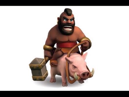 porco meio de transporte