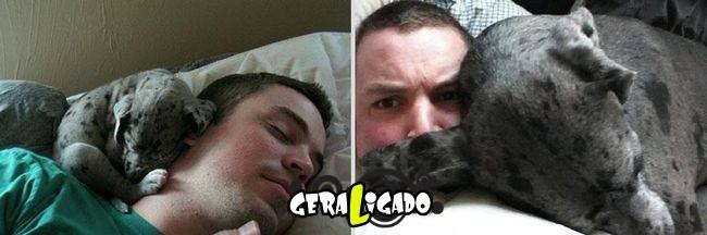 'Antes e depois' muito legais de donos e seus animais de estimação10