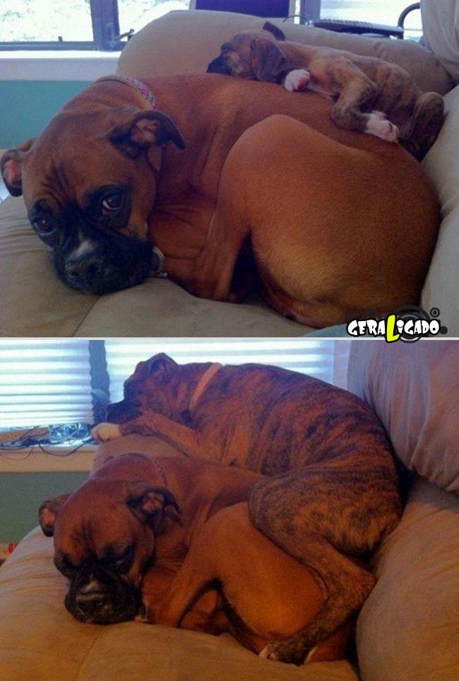 'Antes e depois' muito legais de donos e seus animais de estimação11