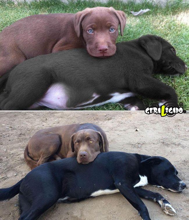 'Antes e depois' muito legais de donos e seus animais de estimação16